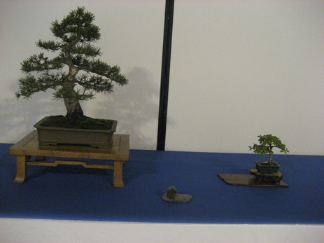 bonsai Audincourt sept 2009 036.jpg