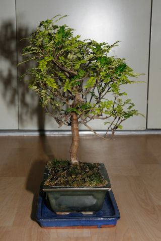 Bonsai_01_8.jpg