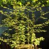 For�t de Metasequoia 05/2013