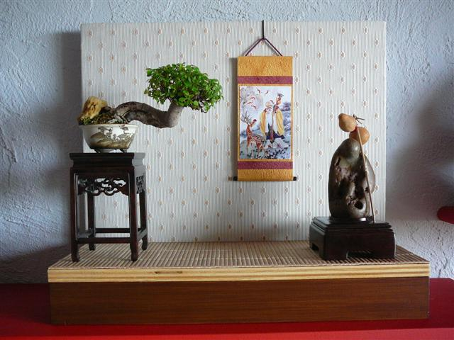 mame page 4 le coin des shohin et mame forums parlons bonsai. Black Bedroom Furniture Sets. Home Design Ideas