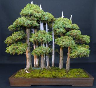 14_Juniperus_foemina_Manfred_Roth__cr_ation_ma_tre_John_Yoshio_Naka__.jpg