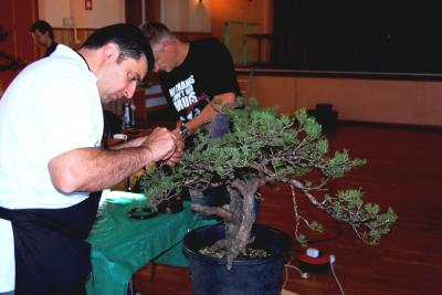 Jeker Bonsai 0004.jpg