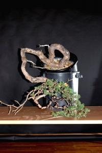 Jeker Bonsai 0018.jpg