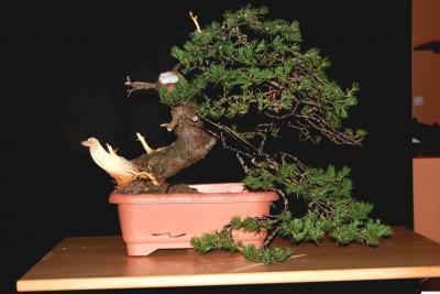 Jeker Bonsai 0016.jpg