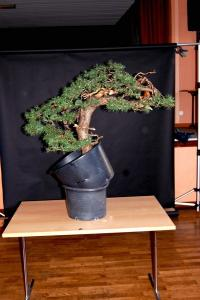 Jeker Bonsai 0013.jpg