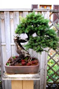 Jeker Bonsai 0089.jpg
