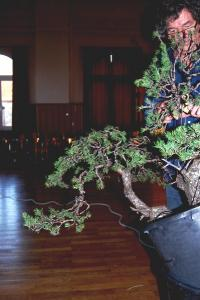 Jeker Bonsai 0032.jpg