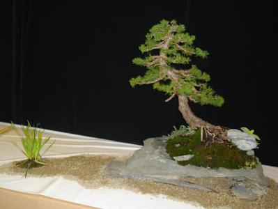 Expo Bonsai Peypin - 10 septembre 2011 059.jpg