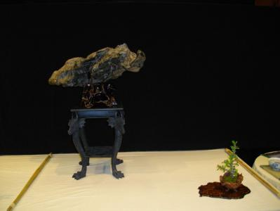 Expo Bonsai Peypin - 10 septembre 2011 030.jpg