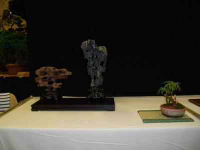Expo Bonsai Peypin - 10 septembre 2011 026.jpg