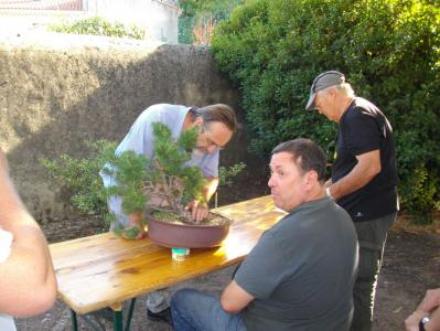 Expo Bonsai Peypin - 10 septembre 2011 072.jpg