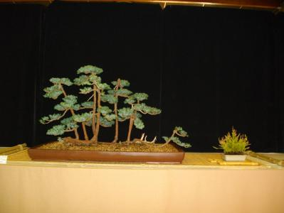 Expo Bonsai Peypin - 10 septembre 2011 090.jpg