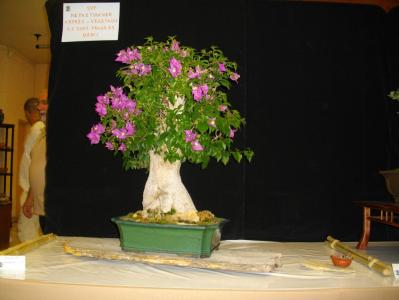 Expo Bonsai Peypin - 10 septembre 2011 016.jpg