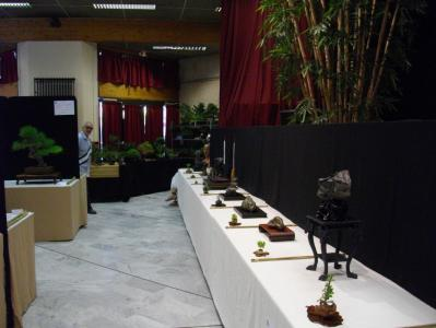 Expo Bonsai Peypin - 10 septembre 2011 089.jpg