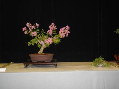 Expo Bonsai Peypin - 10 septembre 2011 057.jpg
