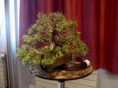 1er cours  de la premi�re classe Acadmemy Bonsai 13-14-15 octobre 2011 (53).JPG