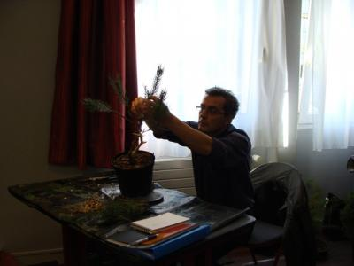 1er cours  de la premire classe Acadmemy Bonsai 13-14-15 octobre 2011 (23).JPG