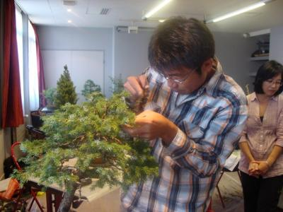 1er cours  de la premi�re classe Acadmemy Bonsai 13-14-15 octobre 2011 (30).JPG