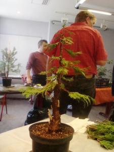1er cours  de la premi�re classe Acadmemy Bonsai 13-14-15 octobre 2011 (49).JPG