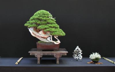 European Bonsai Sans Saulieu Bonsai Show 2016 (3).jpg