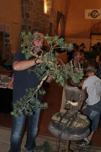 Expo Bonsai 2012 035.jpg