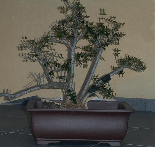 o trouver de grands pots c ramique et poteries forums parlons bonsai. Black Bedroom Furniture Sets. Home Design Ideas