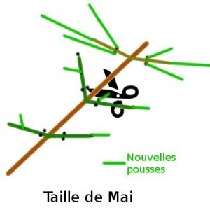 tailleMai.jpg
