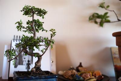 bonsai-orme-2.jpg