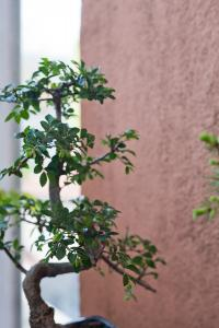 bonsai-odc-debourrement-2.jpg