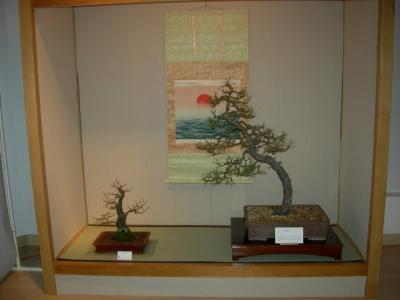 bonsai2009expo_002.jpg