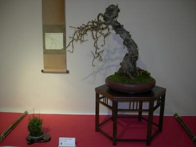 bonsai2009expo_057.jpg