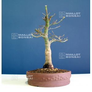 maillot-bonsai_1-8297.jpg