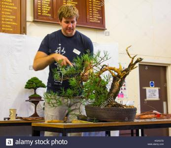 bjorn-bonholm-in-the-early-stages-of-creating-a-scots-pine-pinus-sylvestris-KGXG7D.jpg
