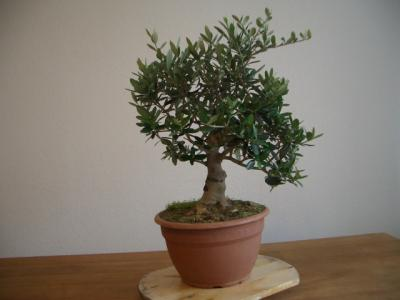 thanh bonsai dating coach Asiandatingcoachcom is tracked by us since april, 2011 over the time it has been ranked as high as 881 999 in the world it was hosted by mzima networks inc, namecheap inc and others.