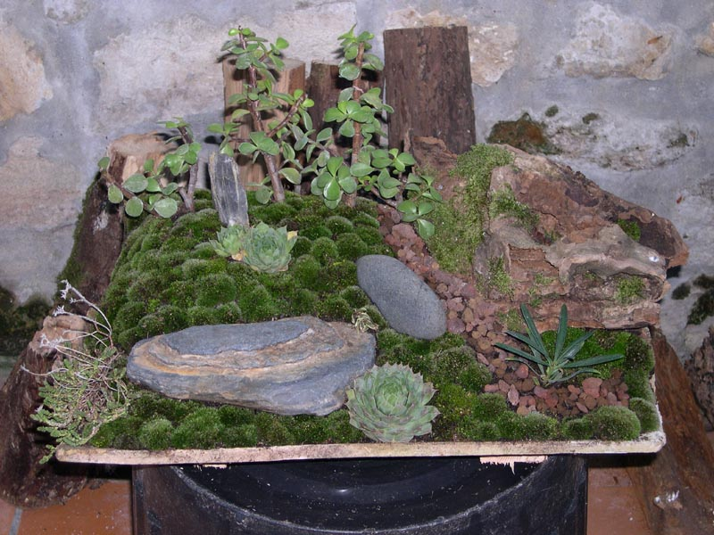 Mini paysage penjing forums parlons bonsai - Mini arbre fruitier ...